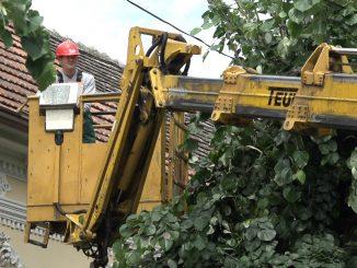 orezivanje drveca